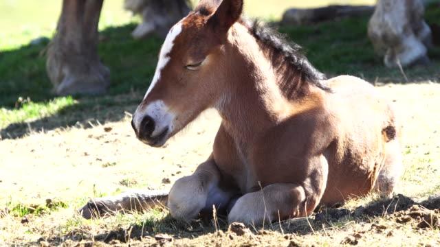 ピレネー山脈の大草原で馬 - 子馬点の映像素材/bロール