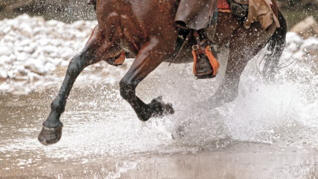 slo mo ds horse's legs crossing a river - all horse riding stock videos & royalty-free footage