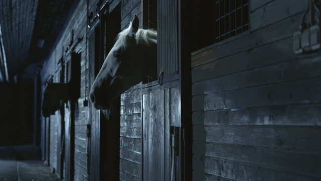 DS Horses looking through stable box opening at night