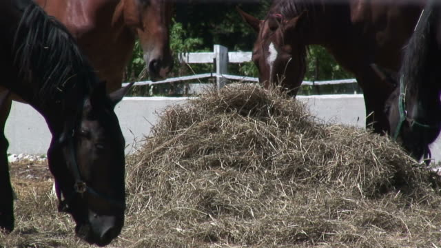 horses' lunch - hd 1080/60i - hay stock videos and b-roll footage