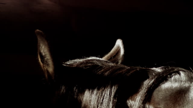 horse's neck close up - horse stock videos & royalty-free footage