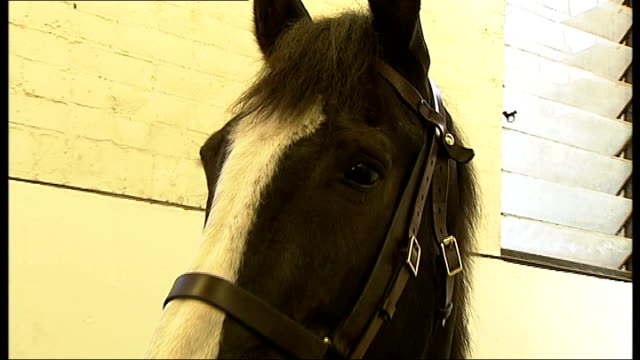 vídeos y material grabado en eventos de stock de horses of household cavalry mounted regiment given health checks by animal charity england london hyde park barracks int various shots gemma taylor... - brida arnés