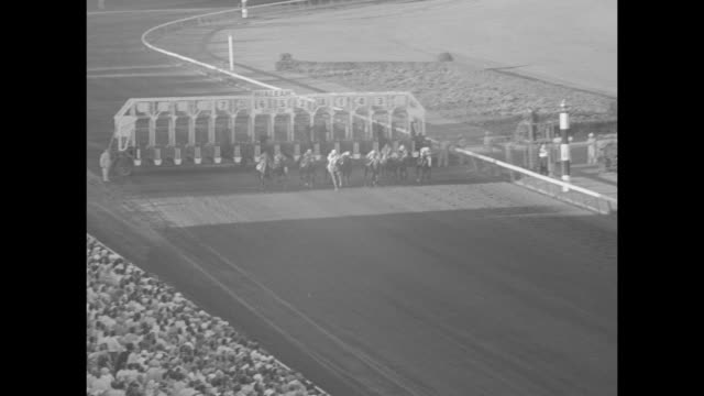 horses on backfield flamingos in water at hialeah park race track / crowd at paddock area / line of horses being led / horses on track / crowd... - hialeah stock videos & royalty-free footage