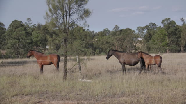 horses on farm in australia - small group of animals stock videos & royalty-free footage