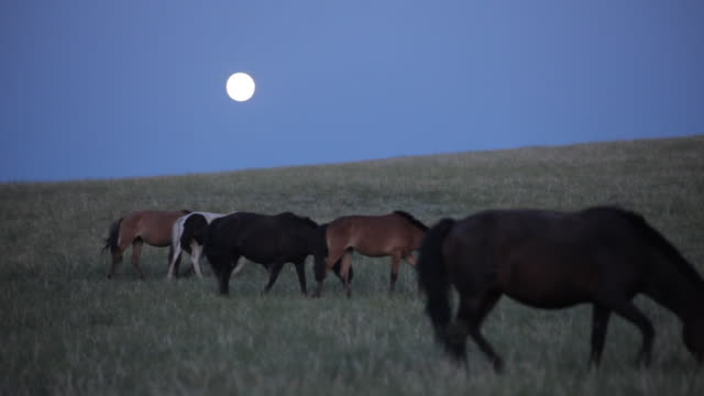horses on grass field and full moon on the background - medium group of animals stock videos & royalty-free footage