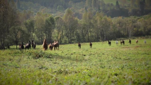 horses on meadow - 動物の色点の映像素材/bロール