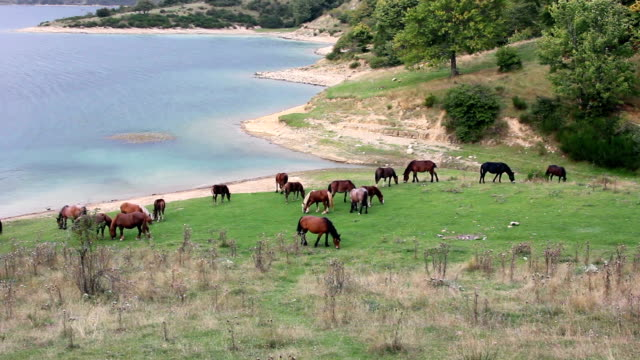 vídeos de stock, filmes e b-roll de cavalos em pasture perto do lago - grupo médio de objetos