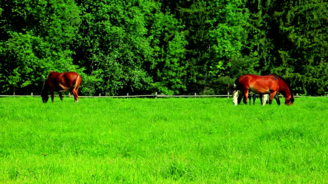 horses on pasture - ranch stock videos & royalty-free footage