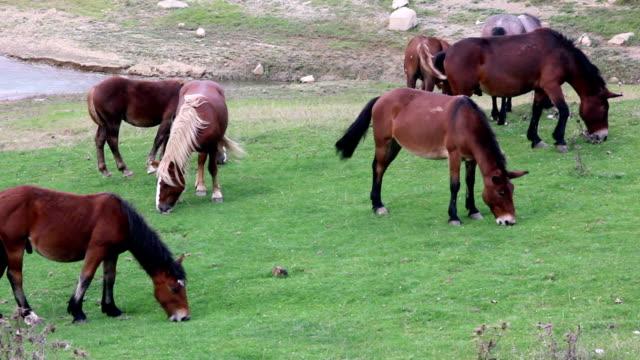 vídeos de stock, filmes e b-roll de cavalos em pasture - grupo médio de objetos