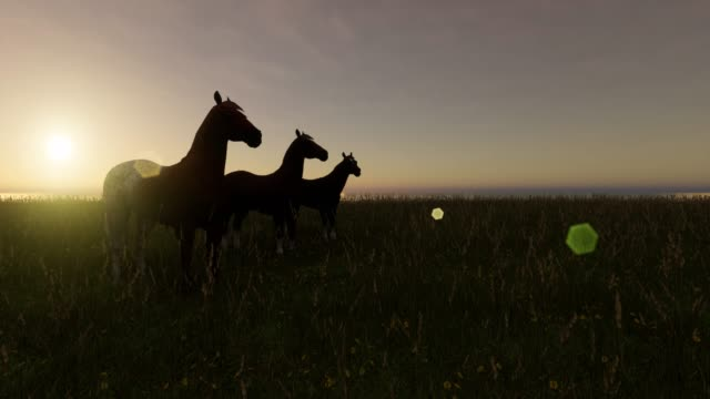 horses on the farm sunrise to rain - brown stock videos & royalty-free footage