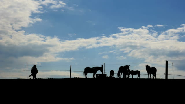 Horses on the horizon