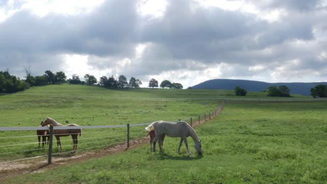 vídeos y material grabado en eventos de stock de horses on the ranch in america - cuatro animales