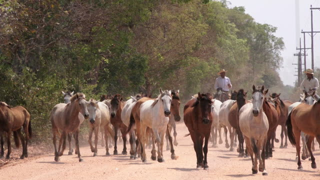 horses on tranpantaneira highway, pantanal, brazil - rancher stock videos & royalty-free footage