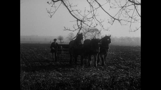 montage horses plowing a field and men carrying grain / east anglia, united kingdom - east anglia stock videos & royalty-free footage