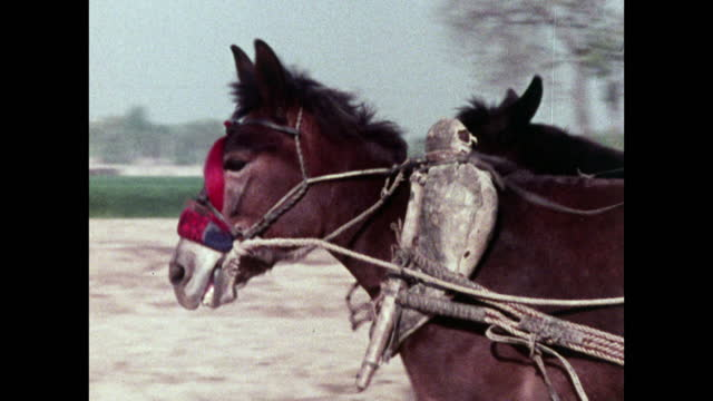horses pull a heavy load along a road in china; 1973 - bridle stock videos & royalty-free footage