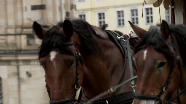 ms td tu horses pulling carriage / dresden, saxony, germany - arbeitstier stock-videos und b-roll-filmmaterial