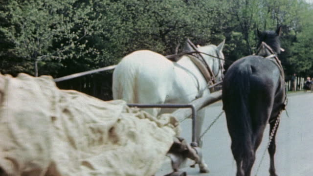 vidéos et rushes de ts horses pulling wagon loaded with covered german army casualties - animaux au travail