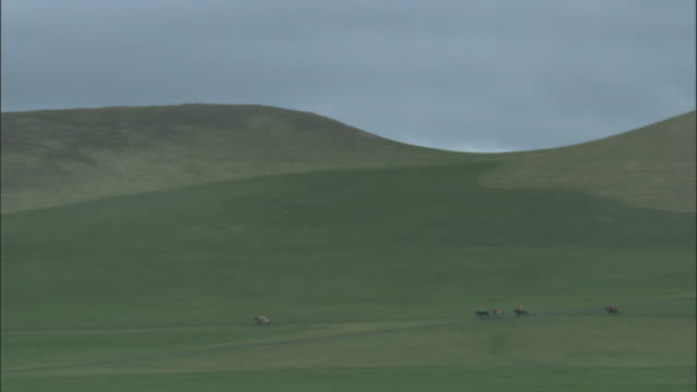 horses race across grass at naadam horse festival, - galopp gangart von tieren stock-videos und b-roll-filmmaterial