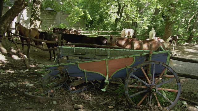 vídeos de stock e filmes b-roll de ws zi horses resting in ranch, damaged cart in foreground / kerkini, serres, greece - grupo médio de animais