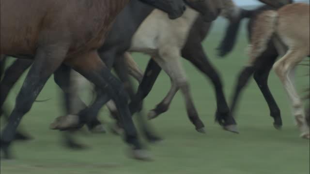 stockvideo's en b-roll-footage met horses run across steppe, inner mongolia, china - steppe