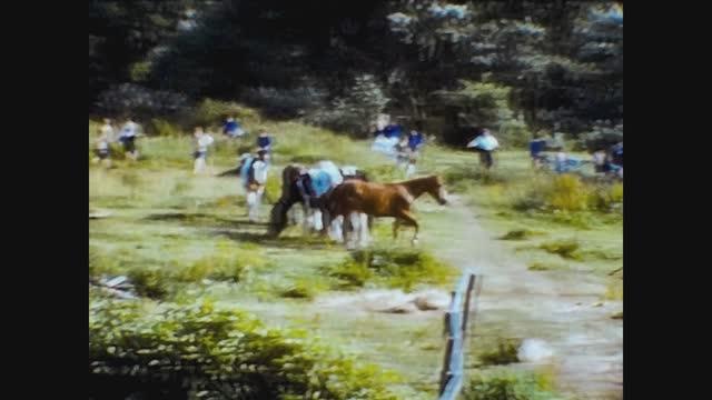 horses run on the prairie, 4k digitized footage - animal hair stock videos & royalty-free footage