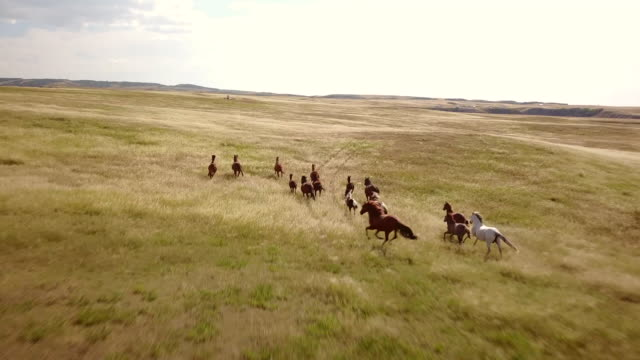 vídeos de stock e filmes b-roll de horses run over the prairies in the badlands. - pradaria