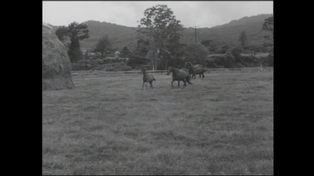 vidéos et rushes de horses run past haystacks in a pasture on a ranch on hokkaido, japan. - animaux au travail