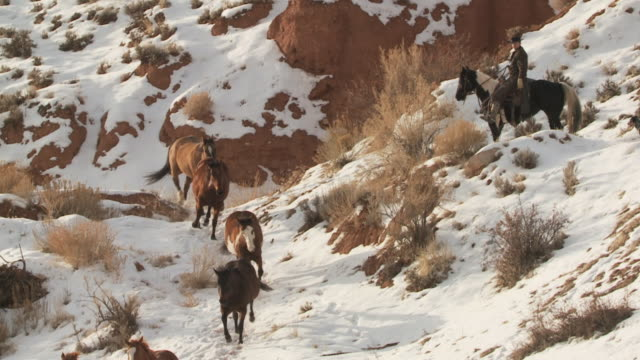 vídeos de stock, filmes e b-roll de slo mo ws pan horses running down hillside with cowboy in snowy landscape / shell, wyoming, usa - cão pastor
