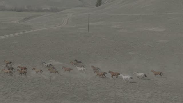vidéos et rushes de horses running in desert | hd drone - animaux à l'état sauvage