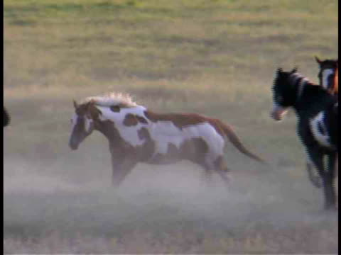 cu, pan, horses running in field, wyoming, usa - medium group of animals stock videos & royalty-free footage