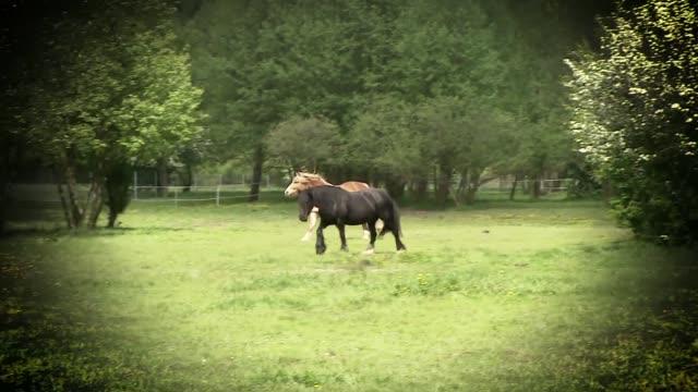 stockvideo's en b-roll-footage met horses running in pasture - vachtpatroon