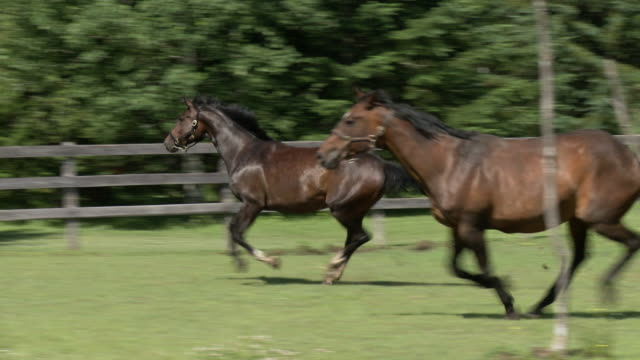 horses running in pen - pen stock videos and b-roll footage