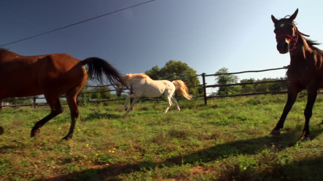 Horses running on field during, sunny day