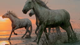 SLO MO Horses running on the beach at sunset - time warp effect