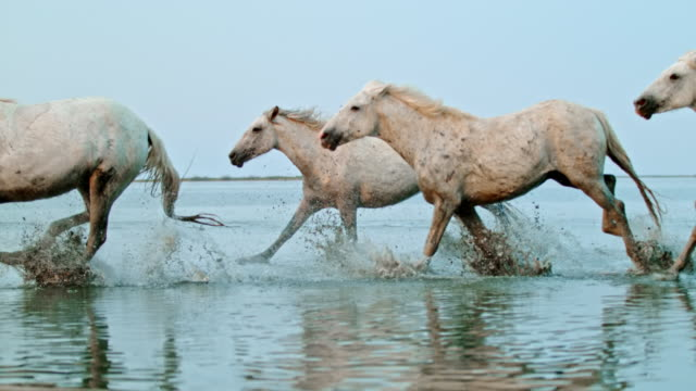 slo mo horses running on the beach – time warp effect - named wilderness area stock videos & royalty-free footage