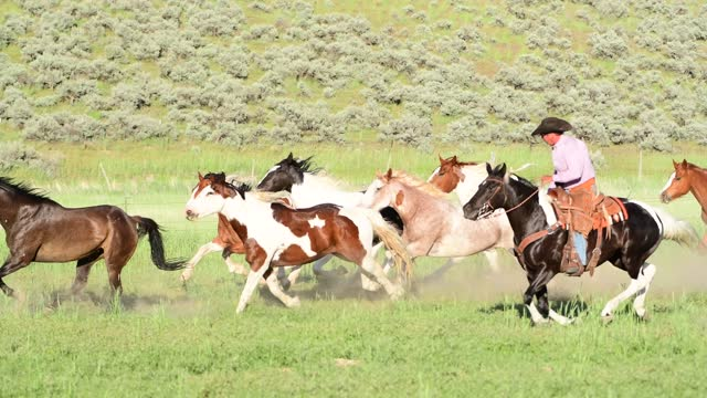 horses running outside with cowboys on a spring day in utah - utah stock videos & royalty-free footage