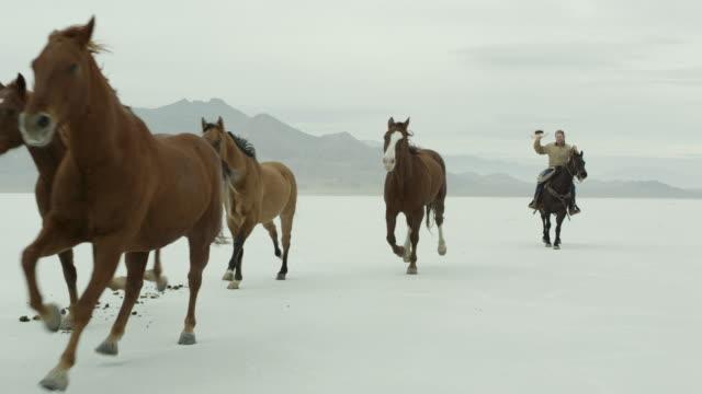 horses running with a cowboy riding across salt flats. - bonneville salt flats stock videos & royalty-free footage
