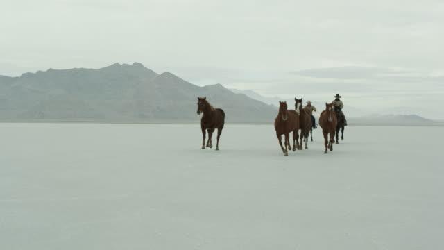 stockvideo's en b-roll-footage met horses running with cowboys riding across salt flats. - bonneville zoutvlakte