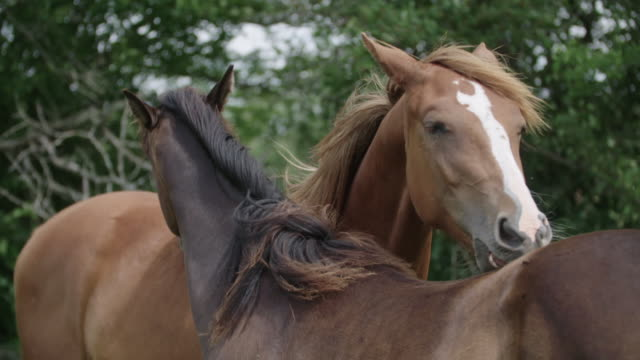 horses scratching one another - ウマ点の映像素材/bロール