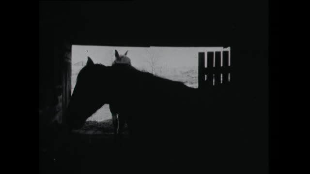 horses silhouette and donkeys in a field - 1961 stock videos & royalty-free footage
