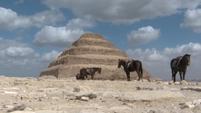 ws, horses standing in front of pyramid of djoser, saqqara, egypt - saqqara stock videos and b-roll footage
