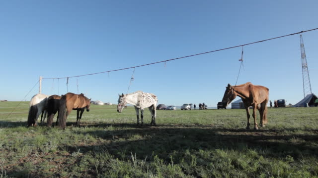 horses standing in line tied to a wire - animale da lavoro video stock e b–roll