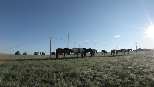 horses standing in line - animale da lavoro video stock e b–roll
