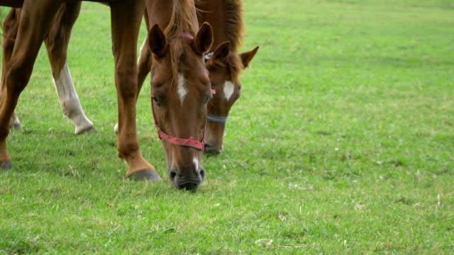 Horses standing on the meadow in 4K in 4K
