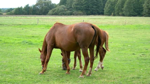 Pferde stehen auf der Wiese in 4K