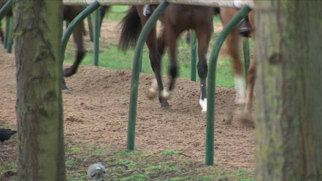 horses trot on race track - horseracing track stock videos and b-roll footage