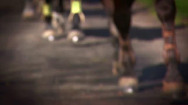 horses trotting in group - ferro di cavallo accessorio per animali video stock e b–roll