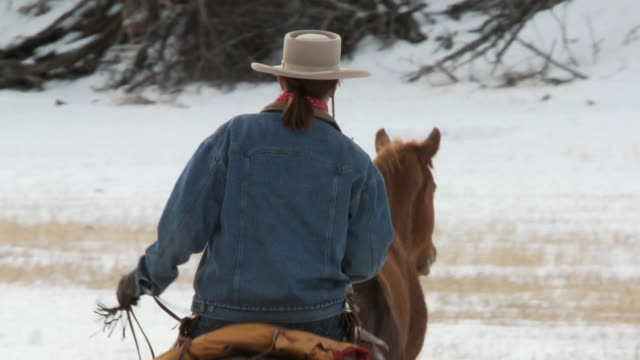 ts horses trotting in snow being herded by cowboy and cowgirl / shell, wyoming, united states - mittelgroße tiergruppe stock-videos und b-roll-filmmaterial