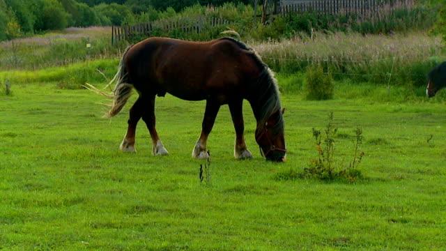 vídeos y material grabado en eventos de stock de caballos - subasta