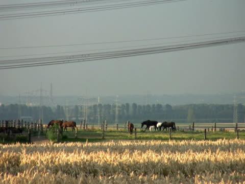 ntsc: pferde - pferdeartige stock-videos und b-roll-filmmaterial